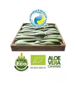 5 Kg of Organic Aloe Vera Leaves 7-10 Years