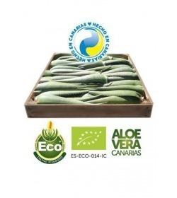 5 Kg of Organic Aloe Vera Leaves 7-10 Years