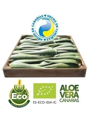 Hojas Frescas Ecologicas Aloe Vera Penca Zabila Canarias