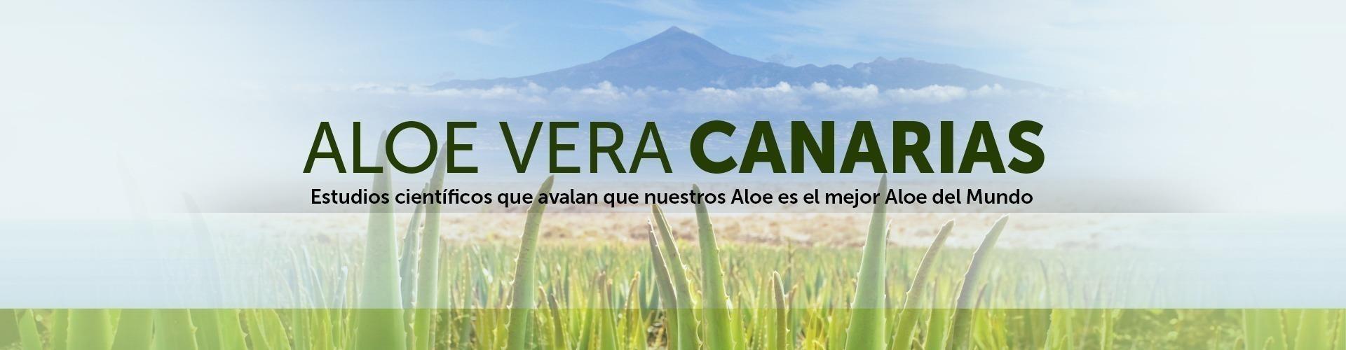 Aloe Vera de Canarias Penca Zabila