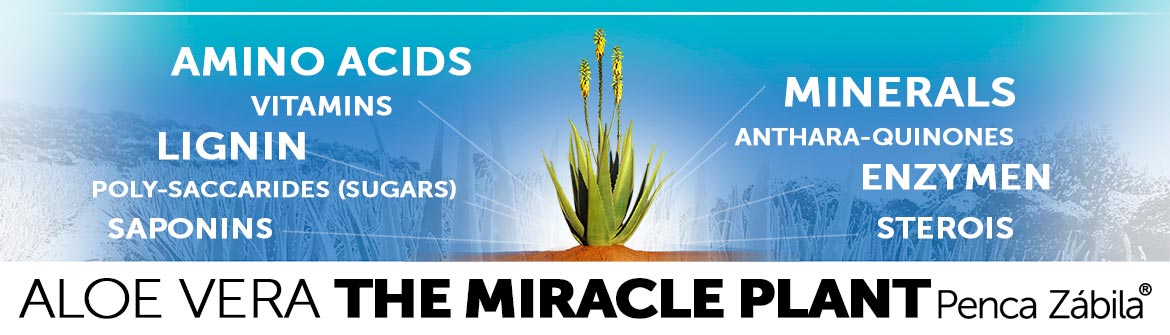 Aloe Vera Benefits & Properties