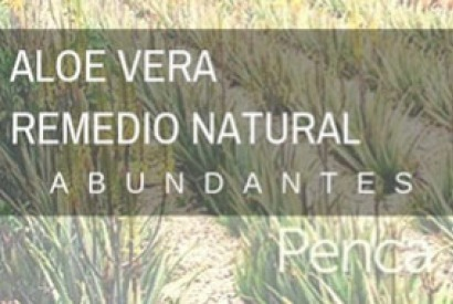 Aloe Vera, natural remedy with abundant uses